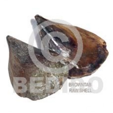 Unprocessed Raw Brown Tab Shell RAW SHELLS BFJ003RS