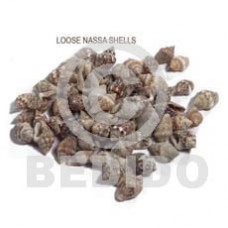Unprocessed Raw Nassa Tiger Shell RAW SHELLS BFJ014RS