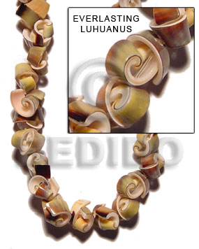 Green 16 inches Luhuanus Green Everlasting Shell Whole Shell Beads BFJ026SPS