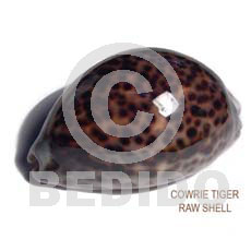 Unprocessed Raw Cowrie Tiger Shell RAW SHELLS BFJ008RS