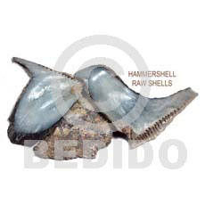 Unprocessed Raw Hammer Shell RAW SHELLS BFJ005RS
