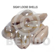 Unprocessed Raw Sigay Cowry Shell RAW SHELLS BFJ015RS