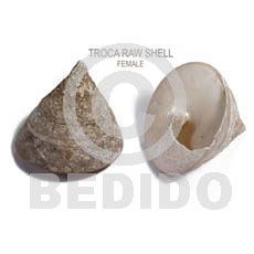 Unprocessed Raw Trocha Shell RAW SHELLS BFJ010RS