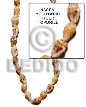 Yellow 16 inches Nassa Tiger Shell Natural Shell Whole Shell Beads BFJ059SPS